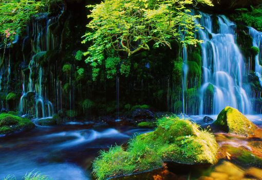 Photo free moss, forest, Japan