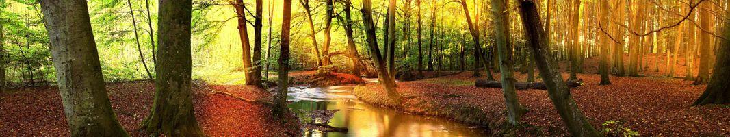 Фото бесплатно арбра, лес, форе