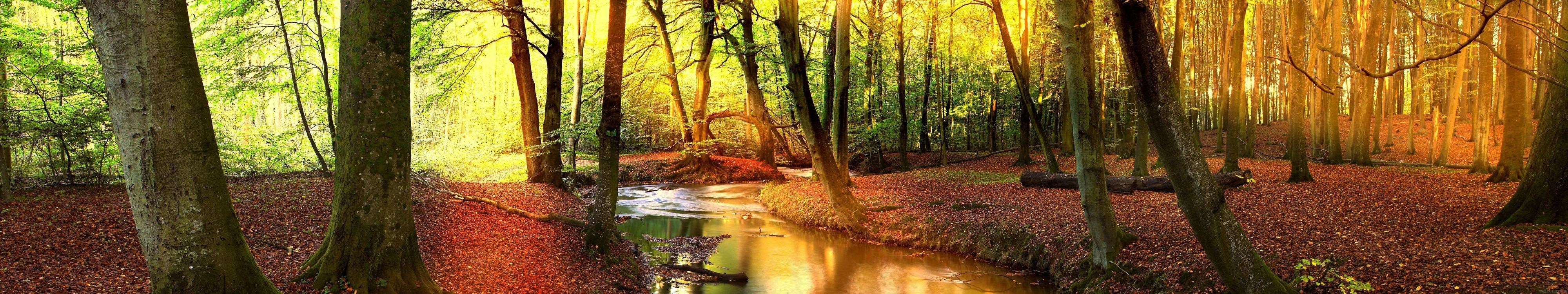Фото бесплатно арбра, лес, форе - на рабочий стол