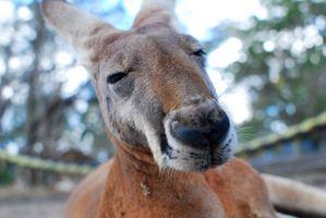 Фото бесплатно дикая природа, зоопарк, млекопитающее