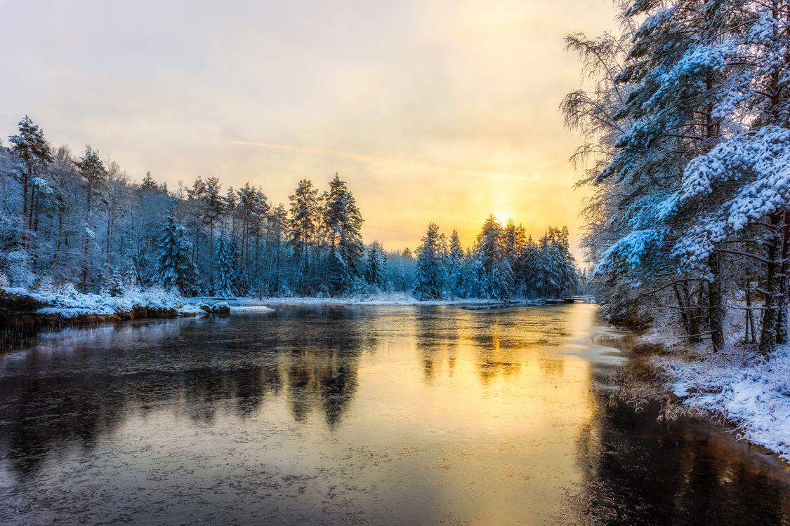 Фото бесплатно Глазкогенский заповедник, Arvika, Швеция, река, зима, лес, закат, деревья, природа, пейзаж, пейзажи