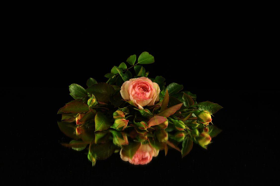 Фото бесплатно розы, букет, цветы, флора, чёрный фон, бутоны, отражение - на рабочий стол
