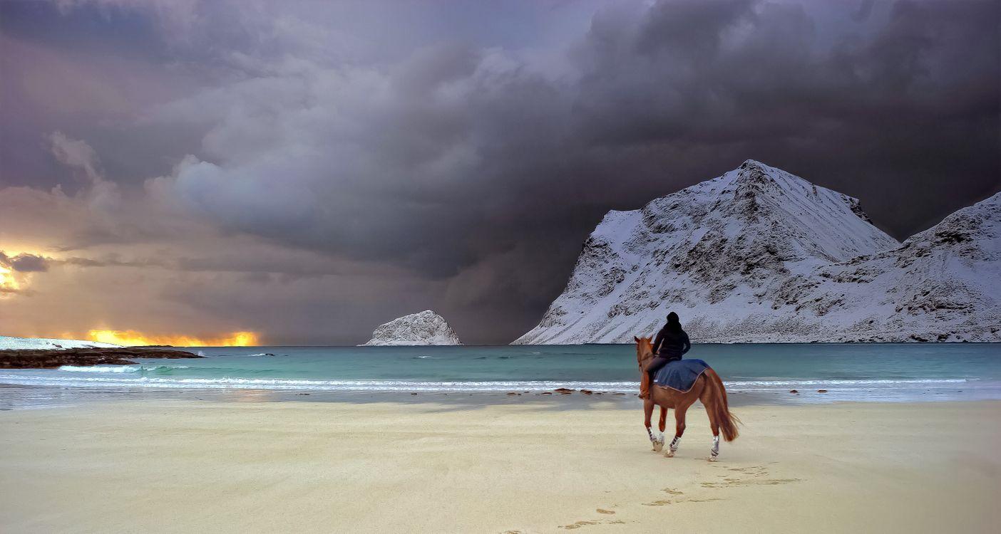 Обои пляж, побережье, лошадь картинки на телефон