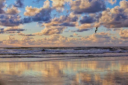 Фото бесплатно море, волны, чайка