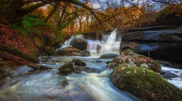Заставки поток, Франция, лес