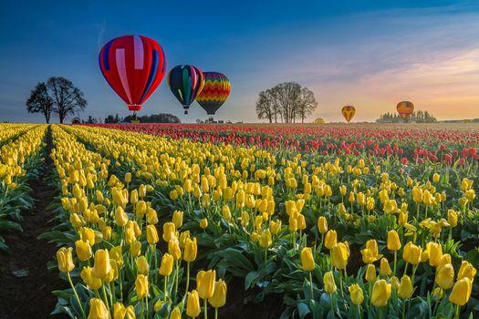 Заставки воздушный шар, цветы, дерево