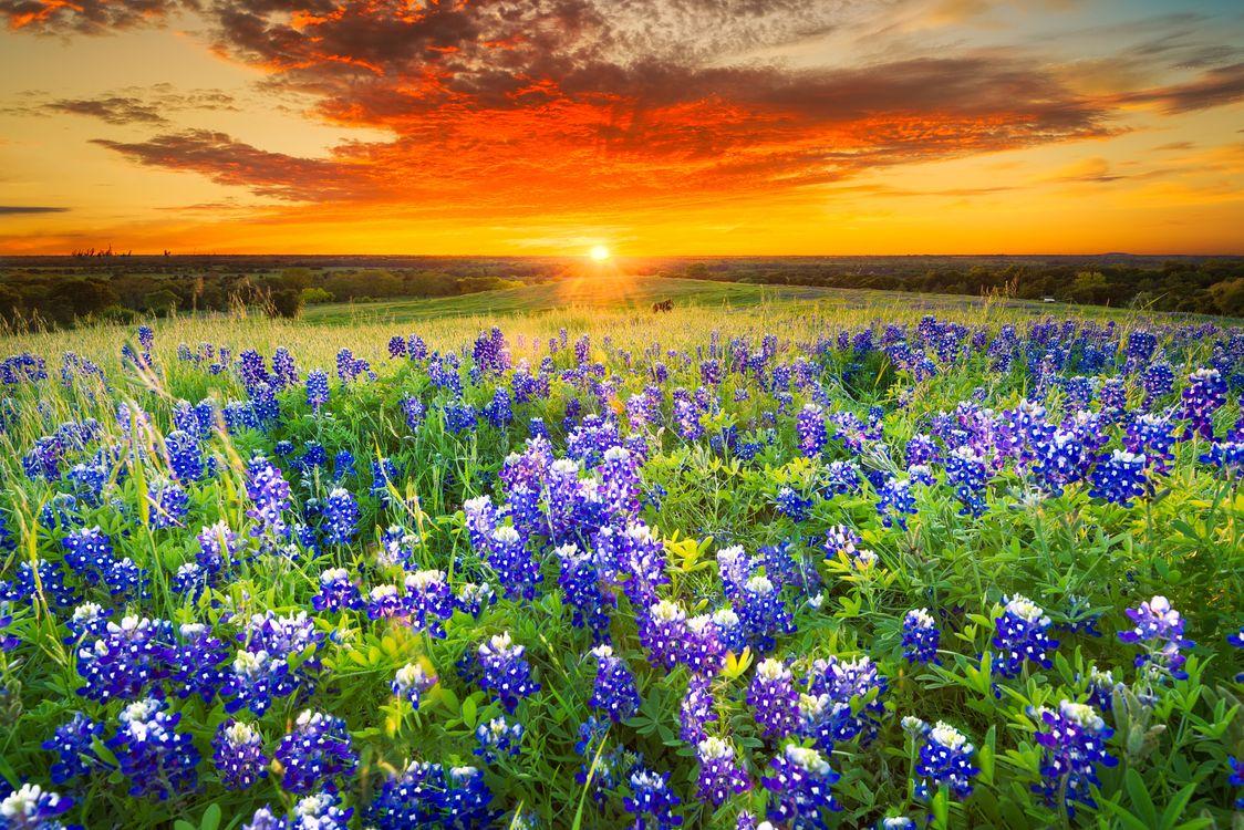 Фото бесплатно цветы, пейзаж, цветочное поле - на рабочий стол