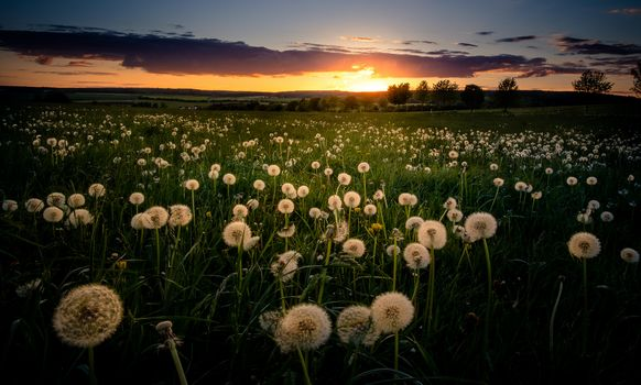 Бесплатные фото закат,поле,трава,одуванчики,деревья,природа,пейзаж