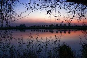 Заставки озеро, отражение, ветви деревьев