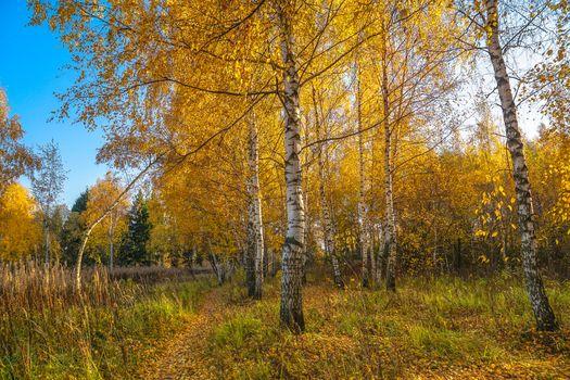 Photo free trees, autumn colors, Biruliovsky forest Park