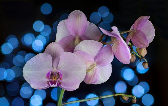 Заставки цветы, букет, цветочный