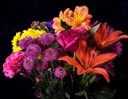 Цветы в хорошем качестве · бесплатное фото