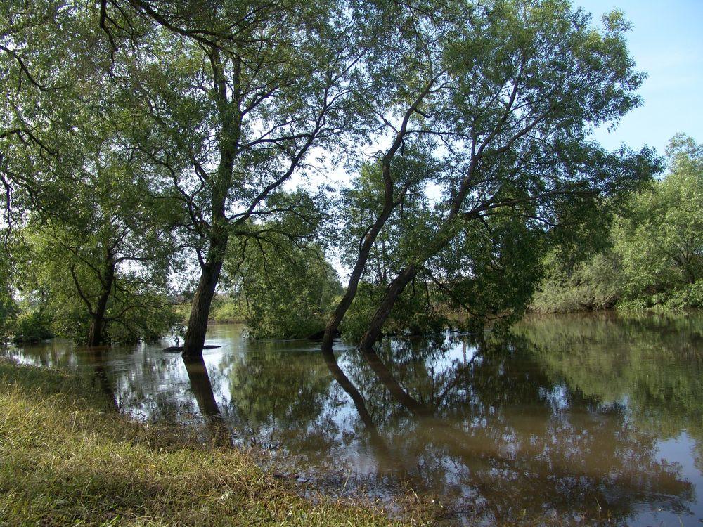 Фото бесплатно деревья, вода, водоём - на рабочий стол