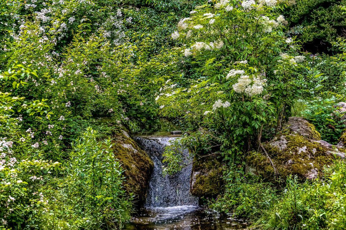 Фото бесплатно Мюнхен зоопарк, водопад, парк, деревья, кустарник, цветы, пейзаж, пейзажи