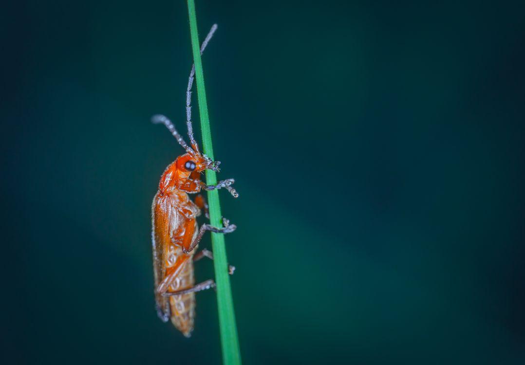 Фото насекомое макрос ошибка - бесплатные картинки на Fonwall