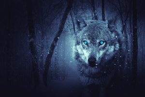 Photo free snow, wolf, nature
