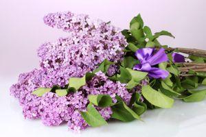 Фото бесплатно букет сирени, флора, цветы