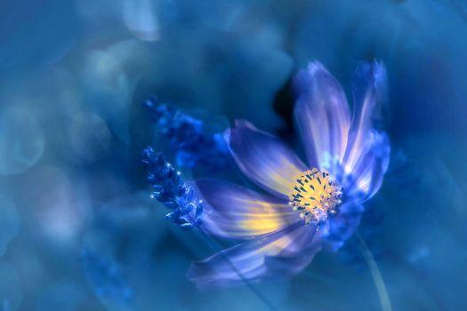 Космея - цветок · бесплатное фото