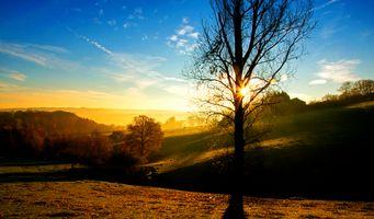Бесплатные фото люблю,небо,природа,дерево,восход,древесное растение,рассвет