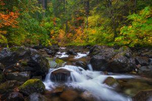 Бесплатные фото Mount Rainier National park,осень,река,лес,деревья,водопад,течение