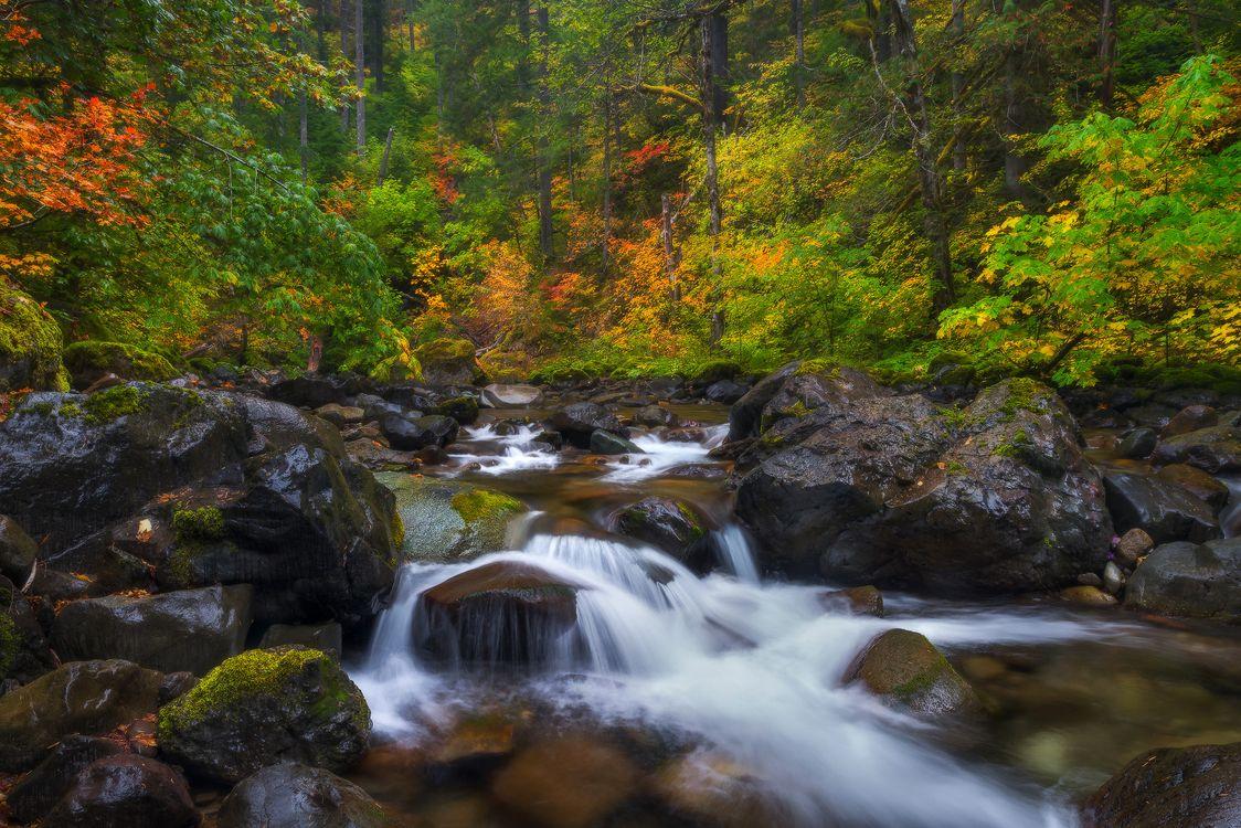 Обои Mount Rainier National park, осень, река картинки на телефон