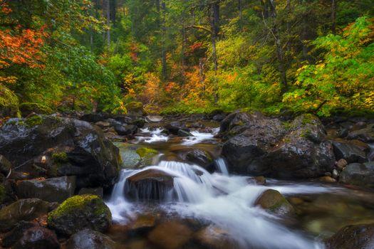 Фото бесплатно Mount Rainier National park, осень, река
