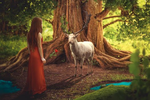 Photo free fairy forest, the girl with the rose, the deer
