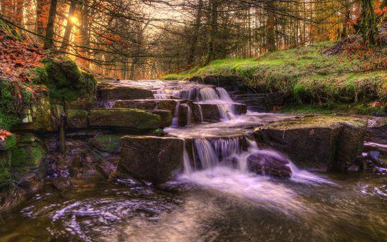 Фото бесплатно закат, лес, трава