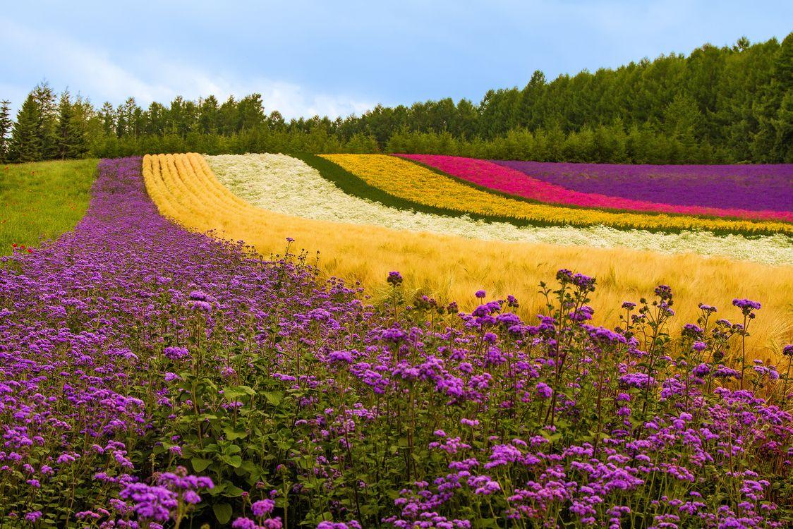 Обои разноцветные цветы, поле, лес картинки на телефон
