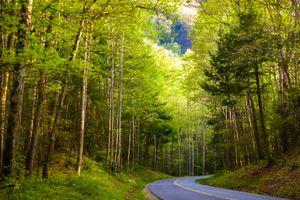 Бесплатные фото Great Smoky Mountains National Park,лес,деревья,дорога,природа,пейзаж