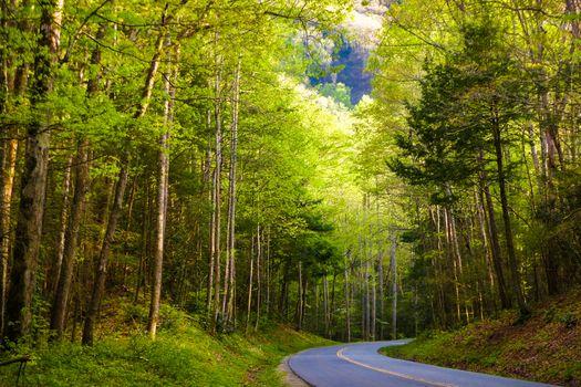 Фото бесплатно Great Smoky Mountains National Park, природа, пейзаж