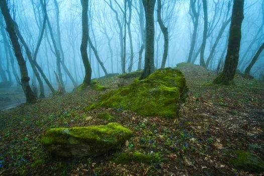 Dreamlike foggy forest · free photo