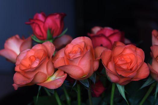 Букет оранжевые розы · бесплатное фото