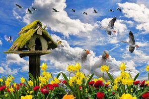 Бесплатные фото весна,цветы,весенние цветы,нарцисс,гуси цветок,клумба,птица