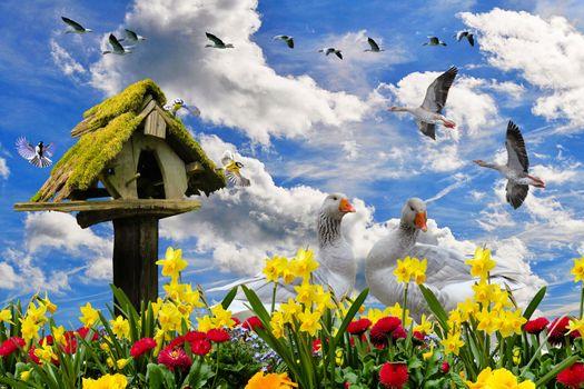 Бесплатные фото весна,цветы,весенние цветы,нарцисс,гуси цветок,клумба,птица,синица,гусь,вольер,гуси летают,птичьего полета