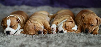 Фото бесплатно щенки, детки, мило