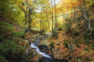 Фото бесплатно природа, склон, осень