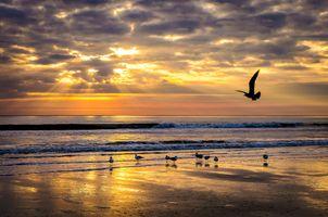 Фото бесплатно Остров Камберленд, штат Джорджия, море