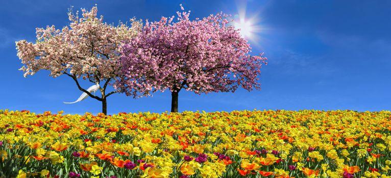 Бесплатные фото природы,пейзаж,эмоции,весна,цветы,тюльпаны,нарциссы,дерево,магнолия,цветение,цвести,весенний цветок