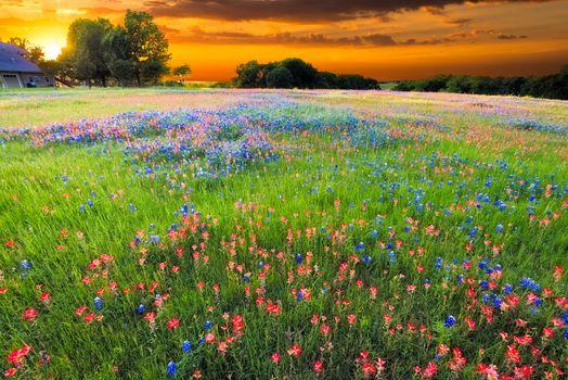 Заставки цветок, цветочный, закат