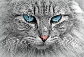 Фото бесплатно кошка кот, морда, взгляд