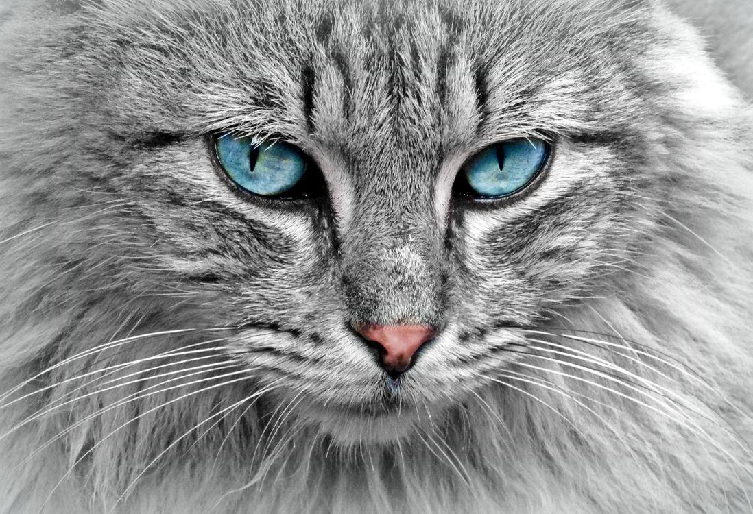 Фото бесплатно кошка кот, морда, взгляд - на рабочий стол