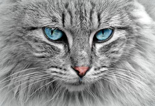 Заставки кошка кот, морда, взгляд