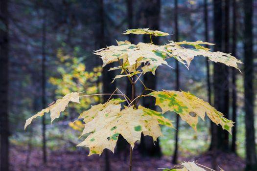 Фото бесплатно лес, осень, листья