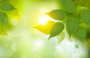 Фото бесплатно листья, береза, свет