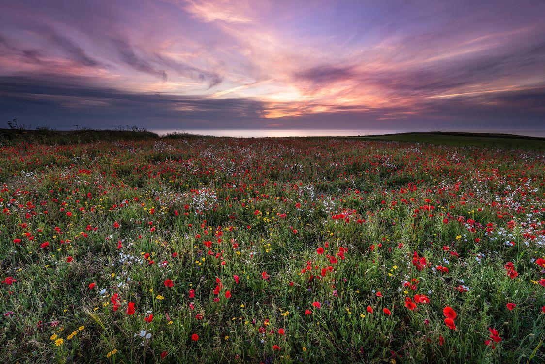Фото бесплатно закат, поле, цветы, небо, берег моря, маки, пейзаж, пейзажи
