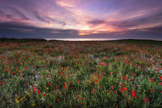 Фото бесплатно закат, берег моря, поле