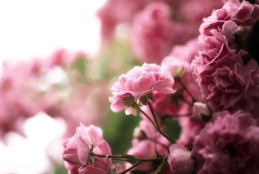 Photo free bouquet, Bush, drops