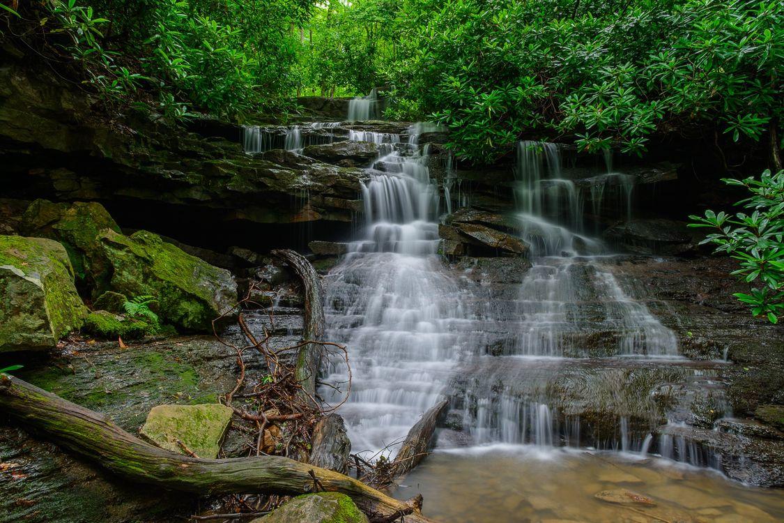 Обои лес, водопад, деревья картинки на телефон
