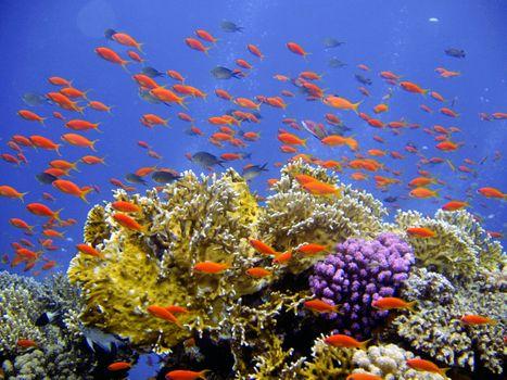 Бесплатные фото море,воды,дайвинг,подводный,биология,рыба,коралл,коралловый риф,риф,аквариум,естественная среда,экосистемный